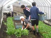 平成22年9月18日 清瀬中学農業体験実習受け入れ(中里地区2名)