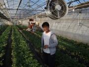 田中農園のイチゴハウス