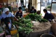小松菜の出荷調整作業